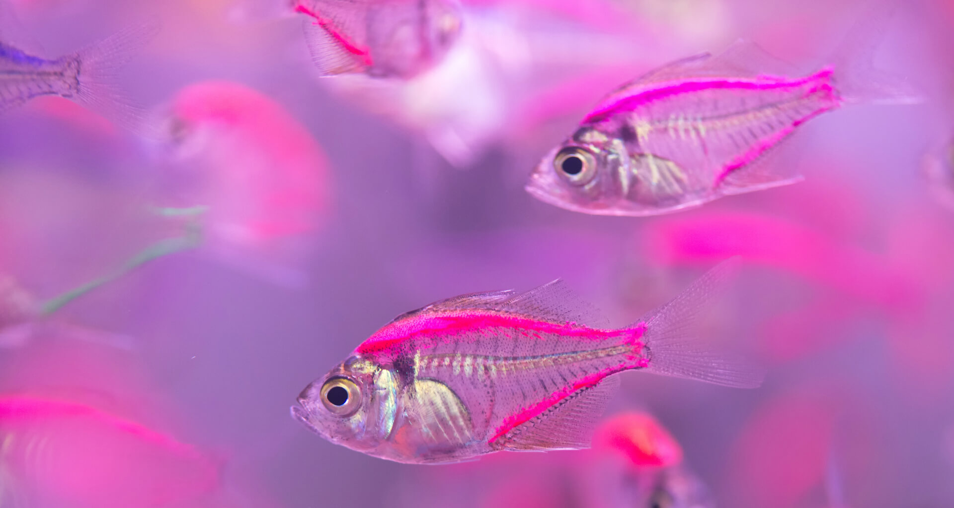Are the small fish about to swim in financial services?