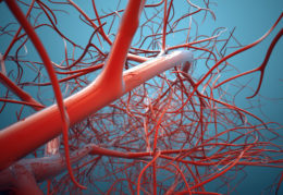 Cynata's stem cells prove effective in coronary artery disease study