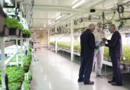 Why the ASX cannabis stocks sector is maturing